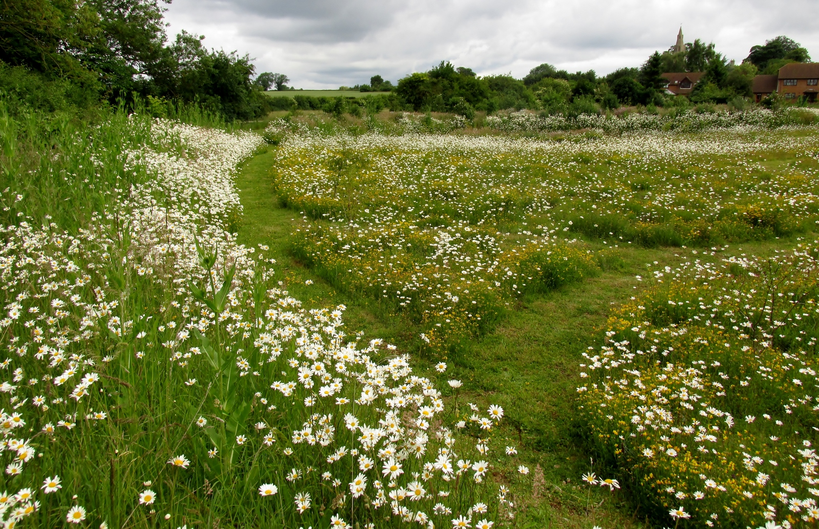 Wildflower Meadow Creation Restoration And Management
