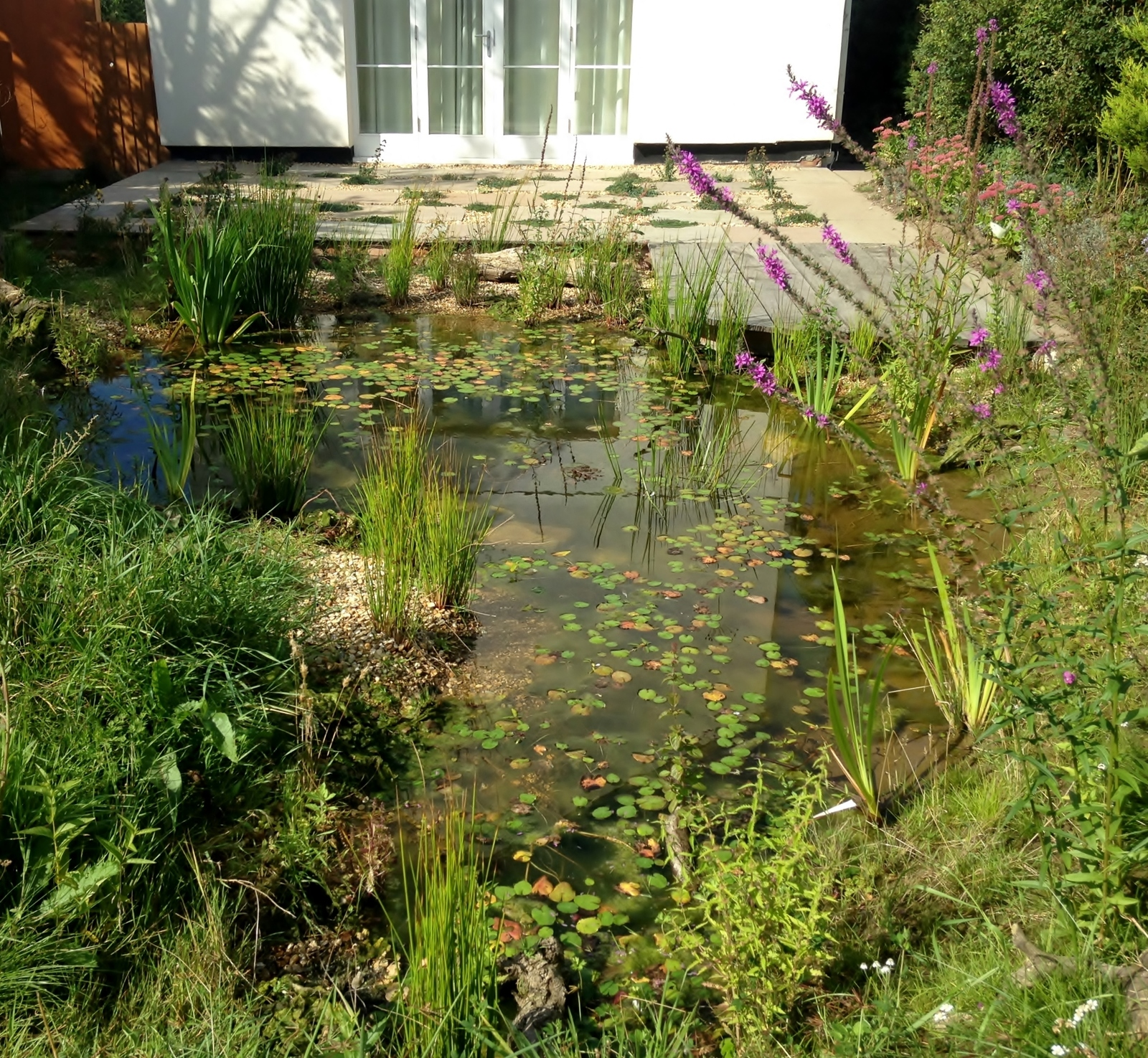 Specialising in natural wildlife ponds of all shapes and sizes for Design wildlife pond